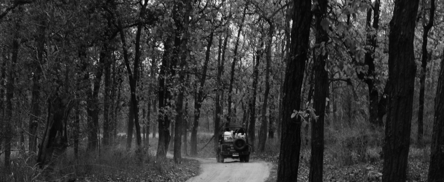 wildlife at bandhavgarh national park travel-blog-by-aakash